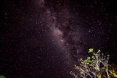 Sternenhimmel am Amazonas