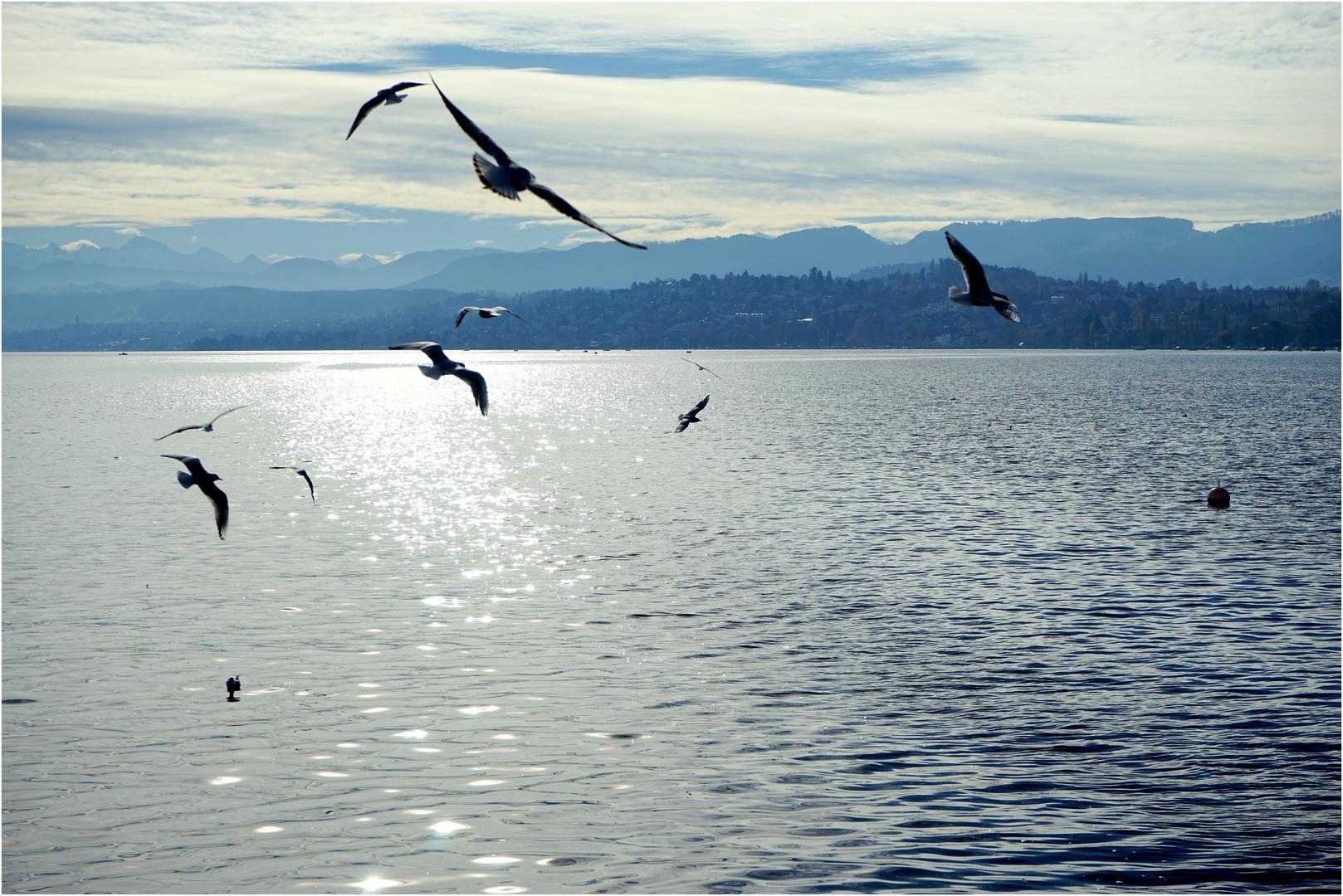 Sterntaler im Zürichsee