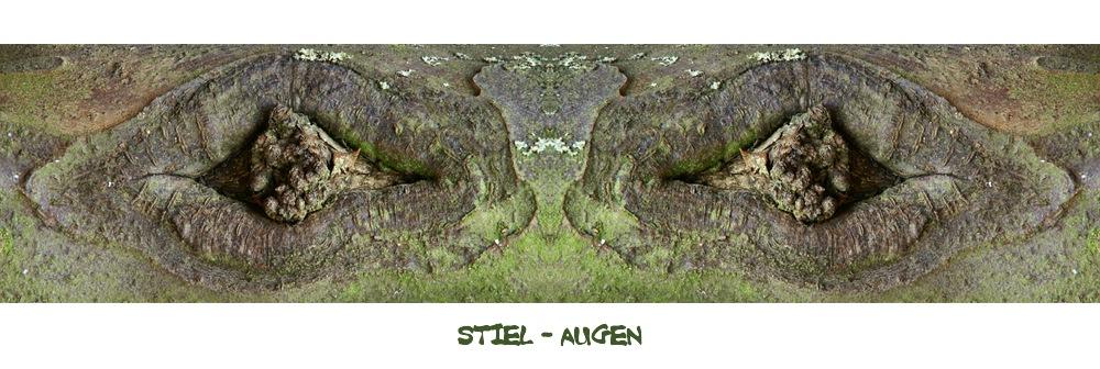 Stiel - Augen