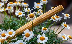 Sti(e)l-Blüten