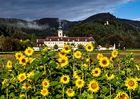 Stift Rein mit Sonnenblumen