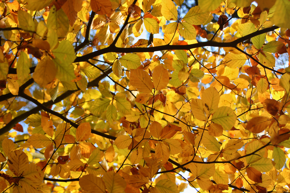 still not fallen leafs