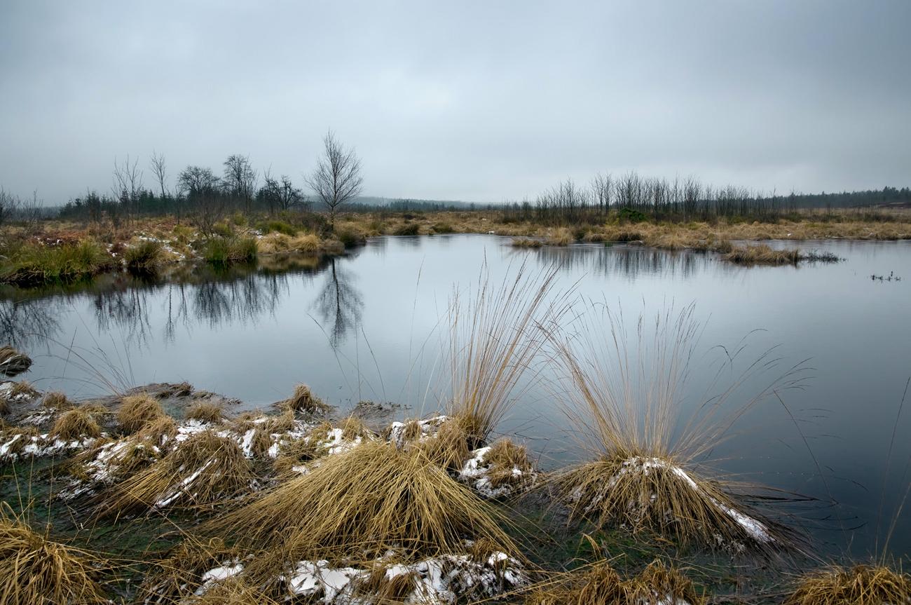 Stille am Moorsee