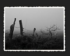 Stille auf den Wiesen