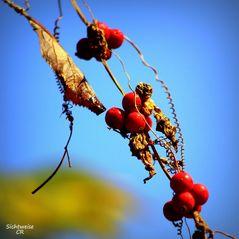 Stille des Herbstes