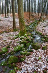 Stille im Wald