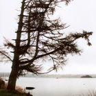 Stille in der Natur