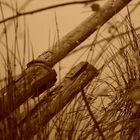 Stilleben am See