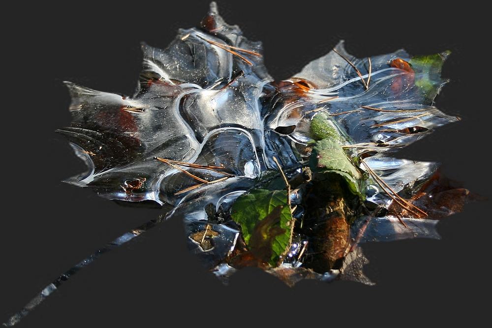 Stilleben in Eis