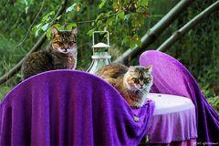 Stilleben mit Katzen