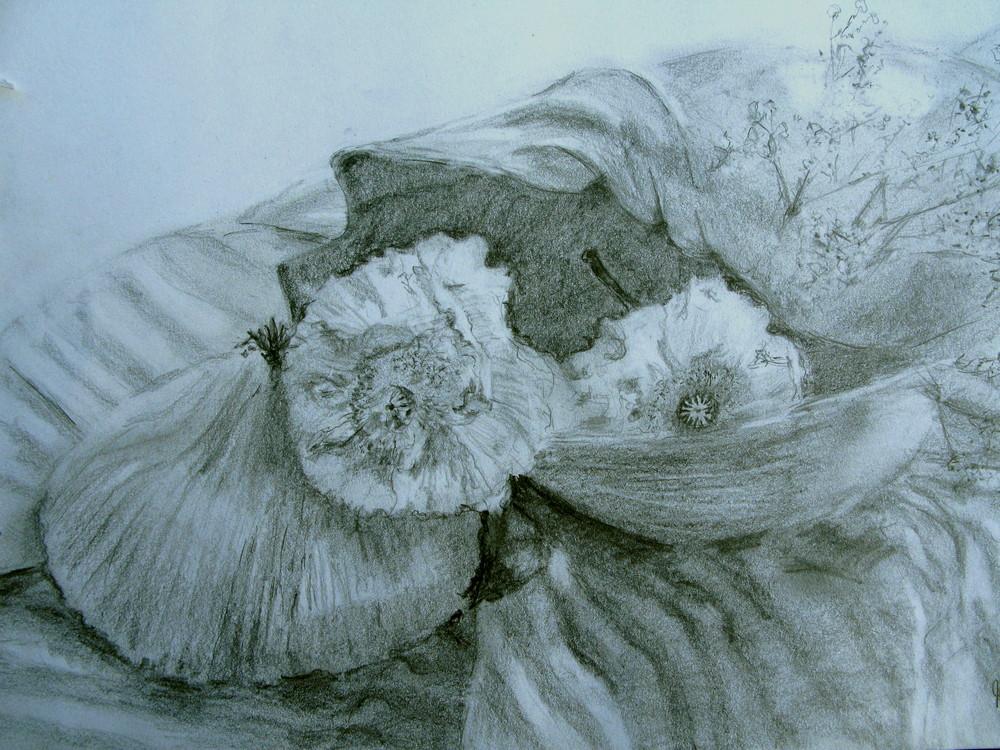 Stilleben ''Muscheln und Mohnblüten''