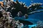 Stilleben unter Wasser