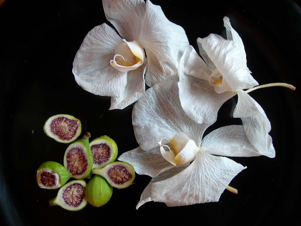 Stilleben, verblühte Orchidee mit Feige