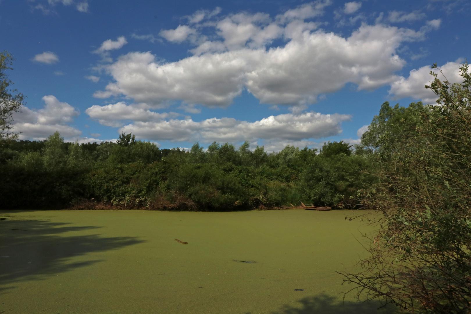 Stiller Teich