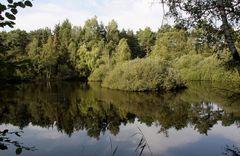 Stiller Waldsee