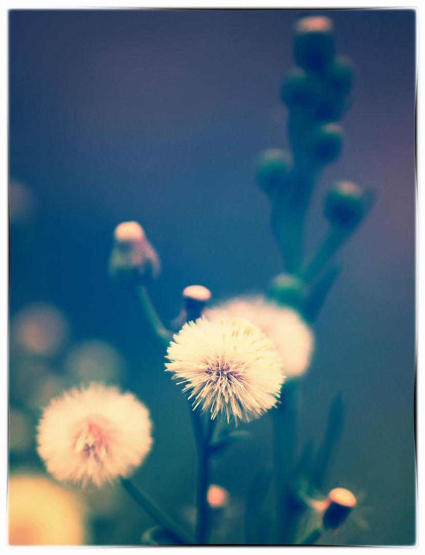 Stilles Mittwochsblümchen