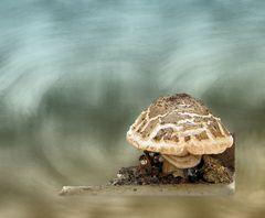 Stilles Pilzleben