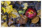 Stillleben mit Herbstmatsch