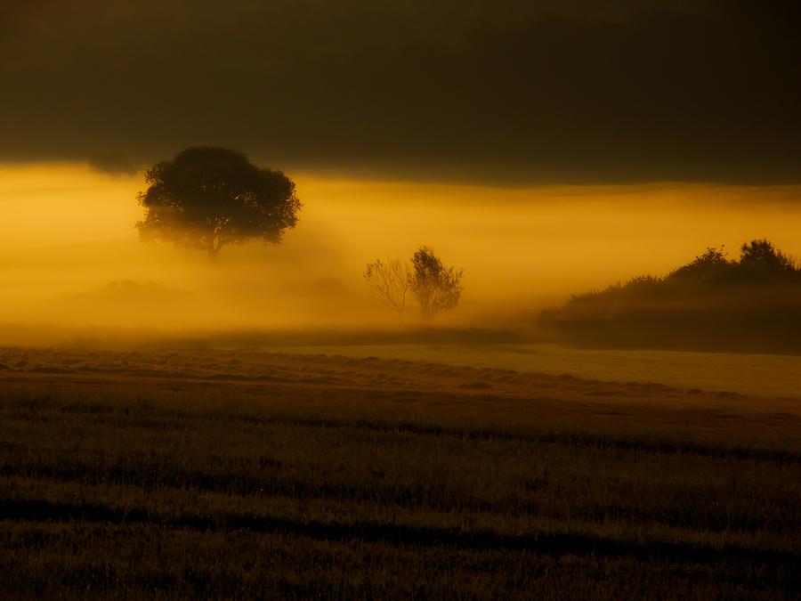 Stimmungsvolle Nebelschwaden