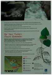Stinging Tree Info