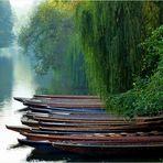Stocherkähne auf dem Neckar