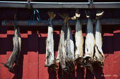 Stockfisch in Henningsvær