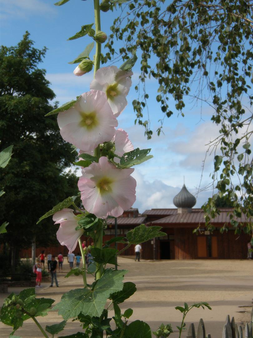 Stockrose mit der Kirche von Taize