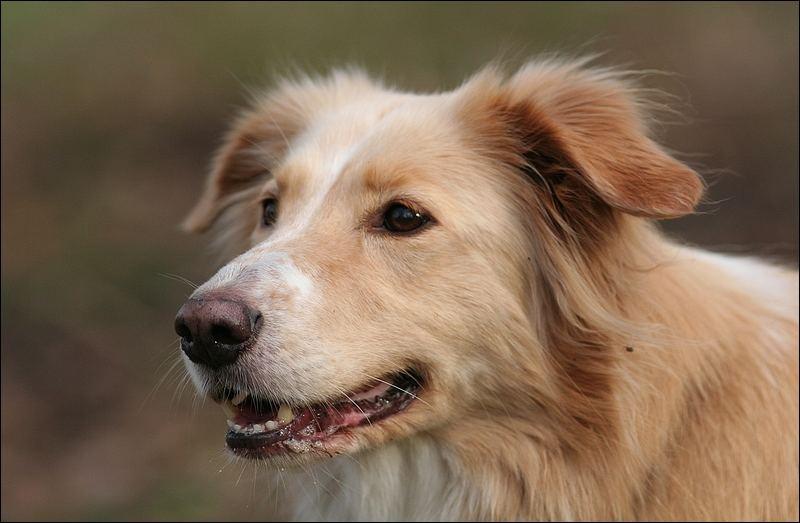 Stöckchen? - Hundeportrait