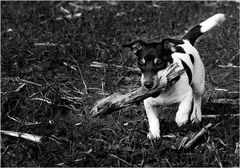 Stöckchen mit Hund