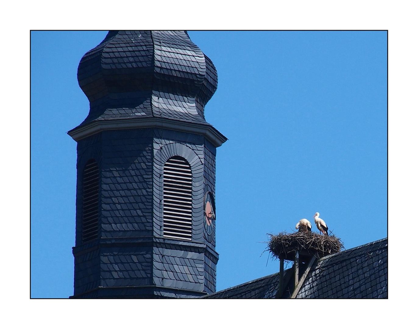Störche auf dem Dach