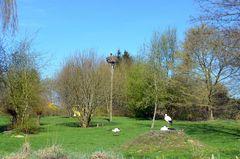 Störche im Vogelpark Marlow