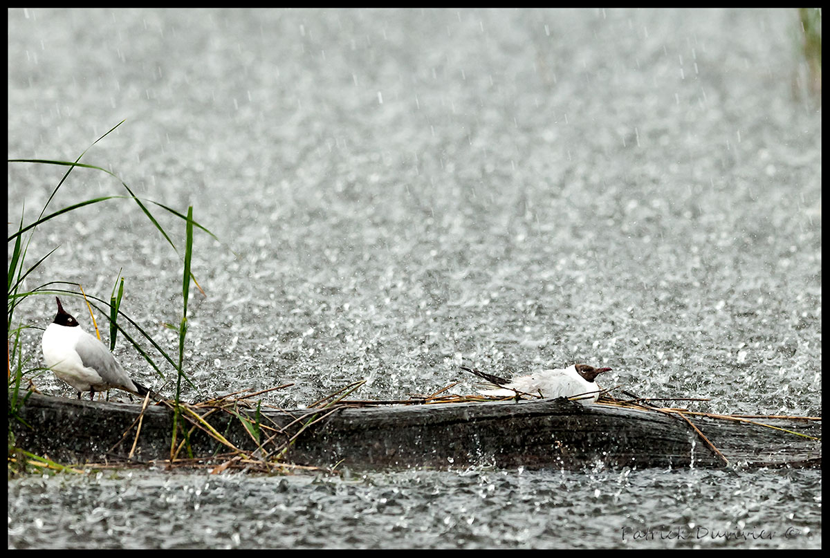stoiques-sous-la-pluie