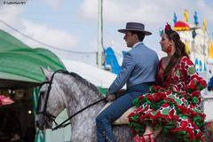 Stolze Andalusierin mit Reiter
