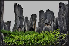 stone forest Yunnan/ China