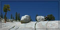 Stones & Trees