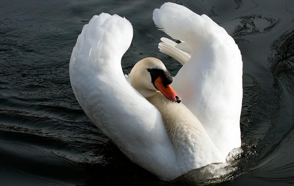 Stop!!! ich bin keine Ente!!