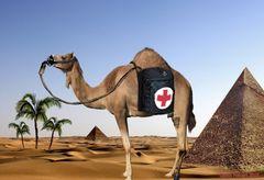 """Stop Smoking """"Du Kamel"""" !!!!"""