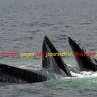 Stoppt die Tötung der Wale