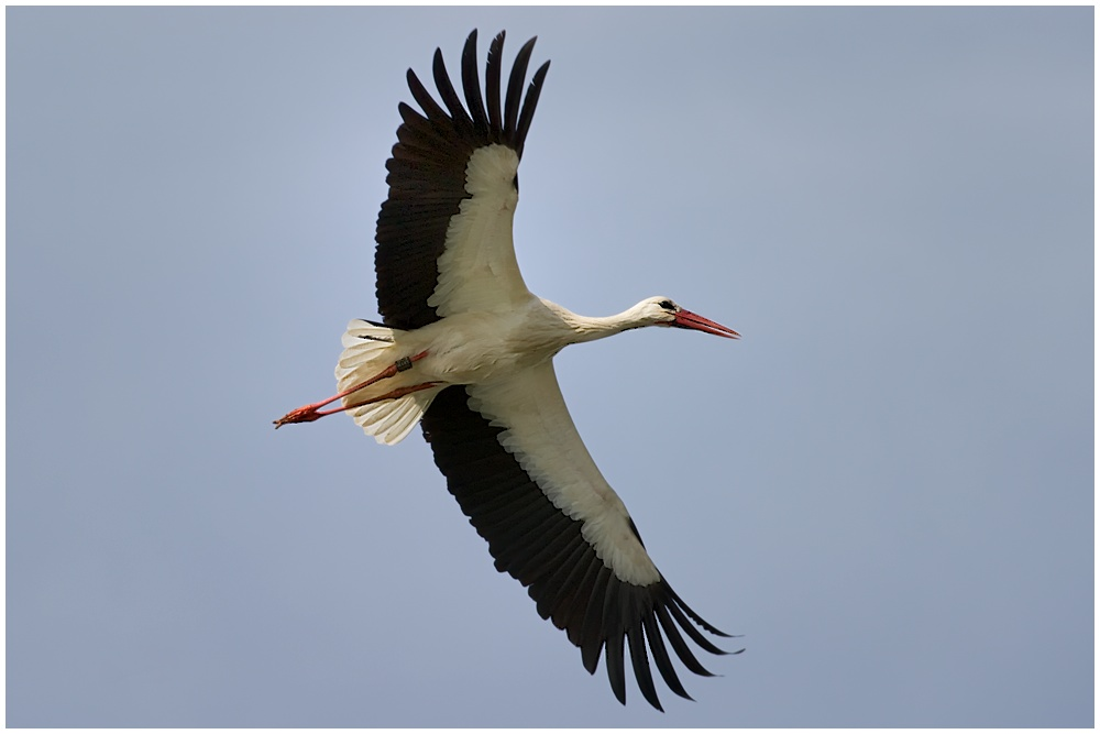 Storch 09/10