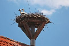 Storch am Kornhaus in Spalt