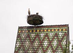 Storch auf dem Kirchturmdach in Brittnau