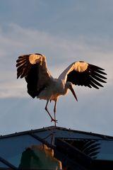Storch (I)