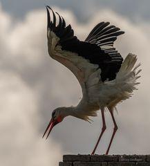 Storch im Gegenlicht
