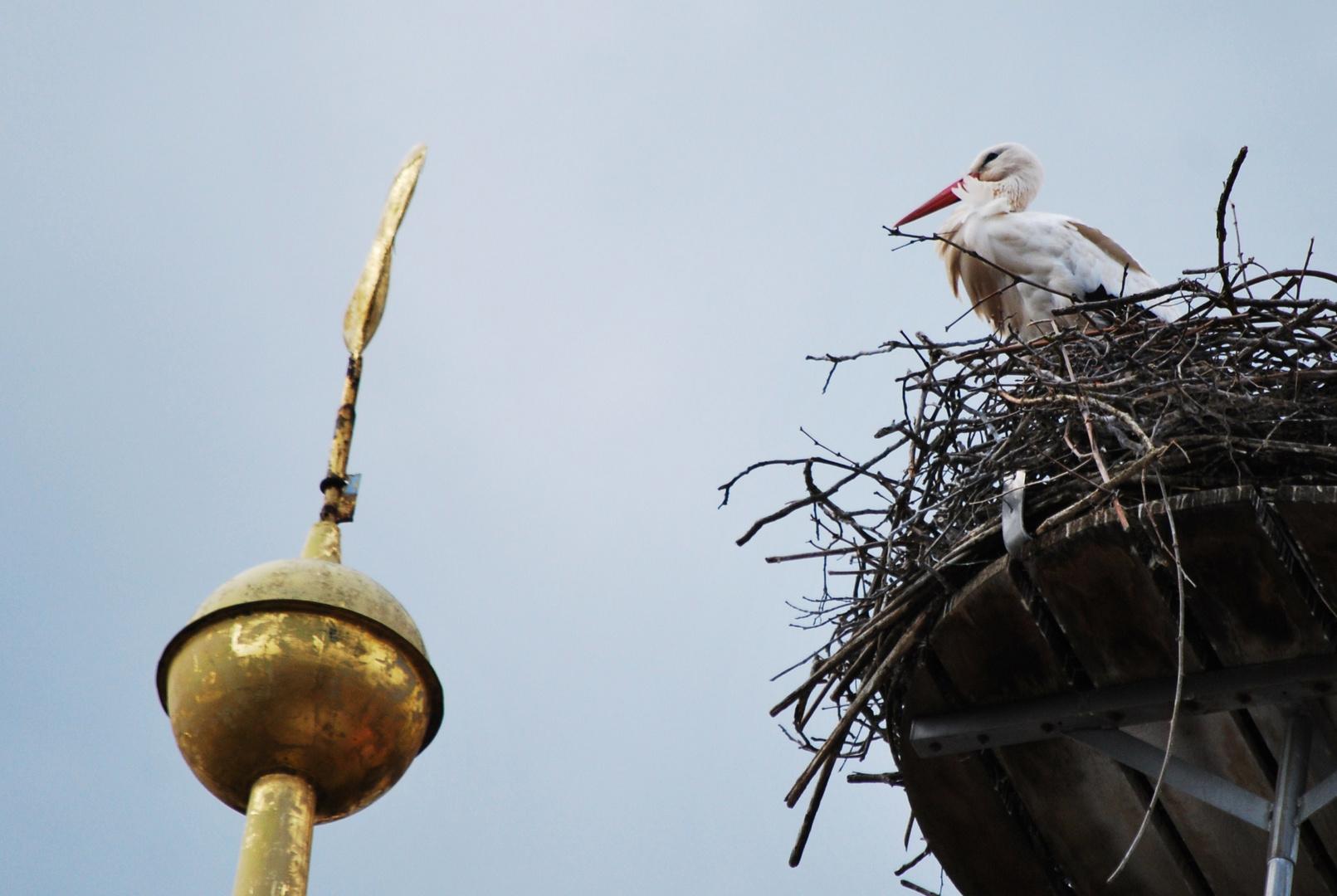 Storch im Wind
