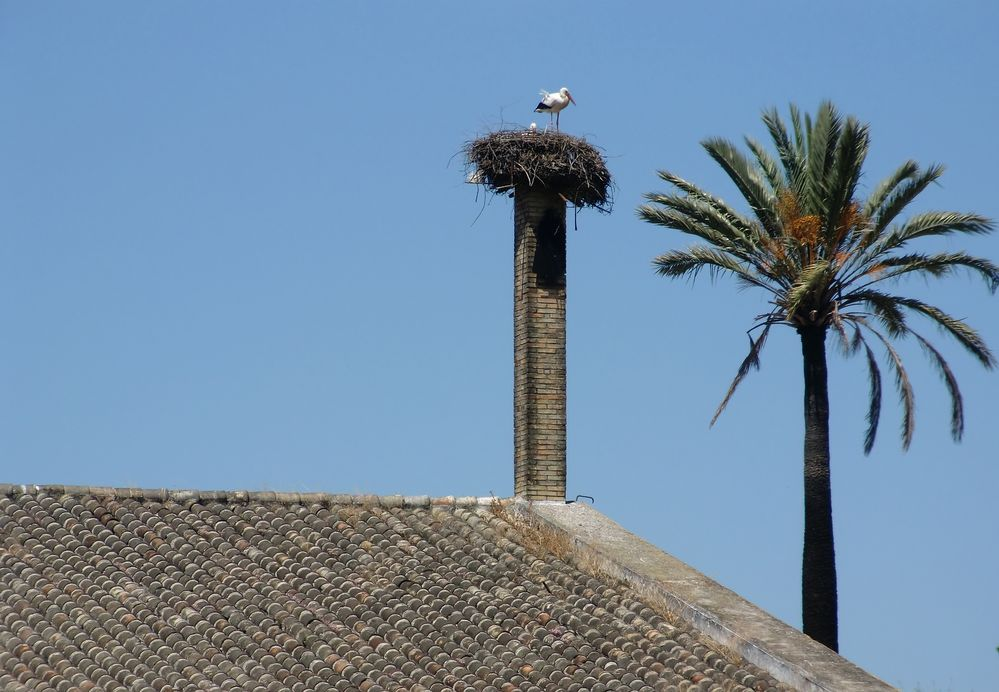 Storch in Andalusien