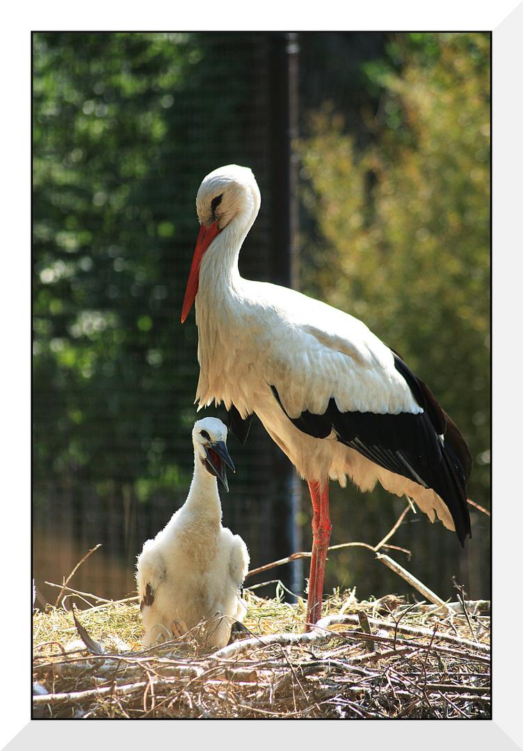 storch mit baby foto  bild  tiere zoo wildpark