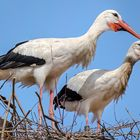 Storch mit PERSONALAUSWEIS