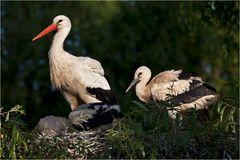 Storchenkinder (2)