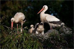 Storchenkinder (4)