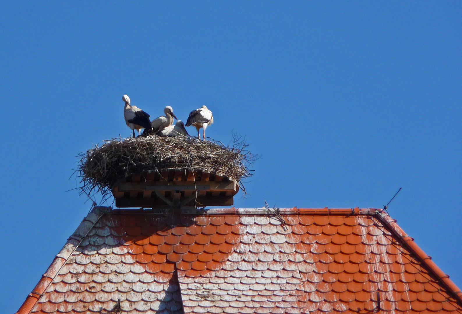 Storchs @ home